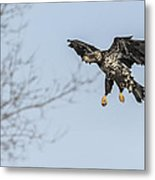 Flying To The Trees Metal Print