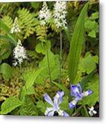Foamflower And Crested Dwarf Iris - D008428 Metal Print