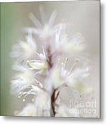 Foamflower Square Metal Print
