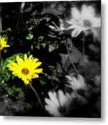 Focus On 2 Yellow Daisies Metal Print