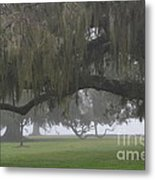 Fog In Ancient Oaks Metal Print