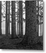 Fog Within The Pines  Bw Metal Print