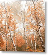 Foggy Autumn Aspens Metal Print