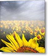 Foggy Field Of Sunflowers Metal Print