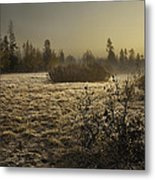 Foggy Meadow Metal Print