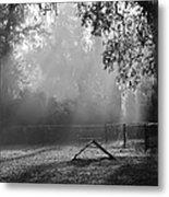 Foggy Morn At Dog Park Metal Print
