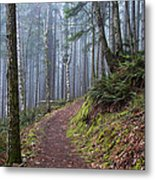 Foggy Morning In The Forest Metal Print