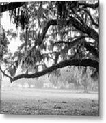 Foggy Morning On Coosaw Plantation Metal Print