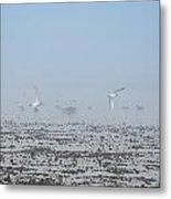 Foggy Seabirds Parksville Beach Metal Print