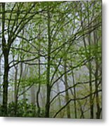 Foggy Woods Metal Print