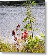 Foliage Along Iowa River Iowa City Ia Metal Print