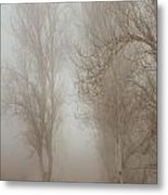 Follow It And Know Your Forests Metal Print
