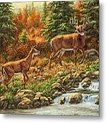 Whitetail Deer - Follow Me Metal Print