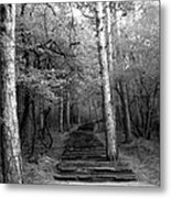 Follow Me... Metal Print by Lucy D