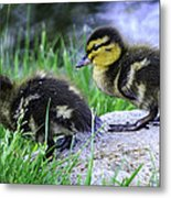 Follow The Leader Ducky Style Metal Print