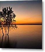 Folsom Lake Tree Metal Print