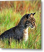 Food In Sight  Metal Print
