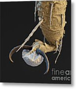 Foot Of A Bat Tick Sem Metal Print