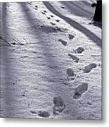 Foot Steps In The Snow In A Forest  In Denmark Metal Print