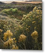Foothills Sage Metal Print by Michael Van Beber