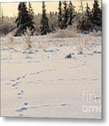 Footprints In Fresh Snow Metal Print