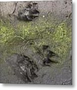 Footprints Of A Large Dog In The Mud Netherlands Metal Print