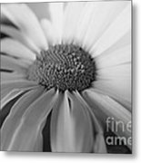 For My Daisy Metal Print