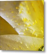 For The Love Of Lilies 4 Metal Print