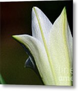 For The Love Of Lilies 9 Metal Print