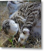 For The Love Of Stretching Metal Print by Marilyn Wilson