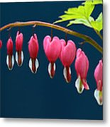 Bleeding Hearts For Your Love Metal Print