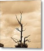 Foreboding Clouds Over Ghost Tree 1 Metal Print