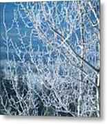 Foreground Frost Metal Print