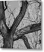 Forest #2 Metal Print