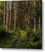 Forest Alder Path Metal Print by Mike Reid