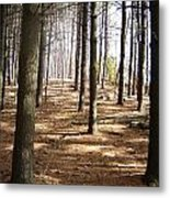 Forest And Trees Metal Print