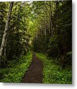 Forest Beckons Metal Print by Mike Reid