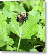 Forest Bee 7260 Metal Print