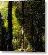 Forest Bench Metal Print
