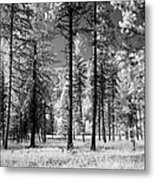 Forest Black And White Metal Print