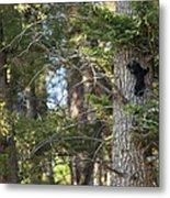 Forest Black Bear Cub Metal Print