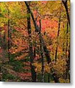 Forest Blush Metal Print