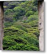 Forest Canopy Through The Window Of The Ruins Metal Print