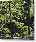 Forest Cathedral Metal Print
