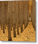 Forest Cathedral - One Metal Print