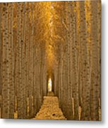 Forest Cathedral - Two Metal Print