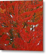 Forest Colors Of Fall Metal Print by Donald Torgerson
