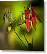 Forest Columbine  Metal Print