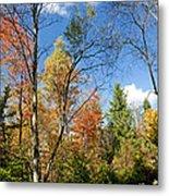 Forest Edge Autumn Pocono Mountains Pennsylvania Metal Print