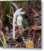 Forest Fairy Indian Pipe Metal Print